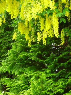 tree with yellow flower