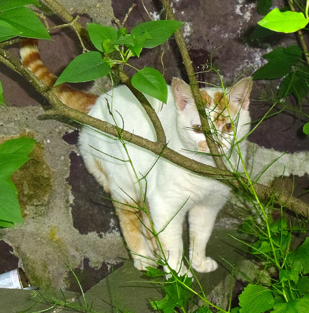cat hiding on the leaves